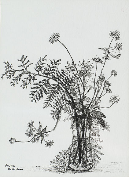 Common fragile fern, Cystopteris fragilis, and Masterwort, Astrantia major (2000)  Ink on paper - 15.8x11.4 cm