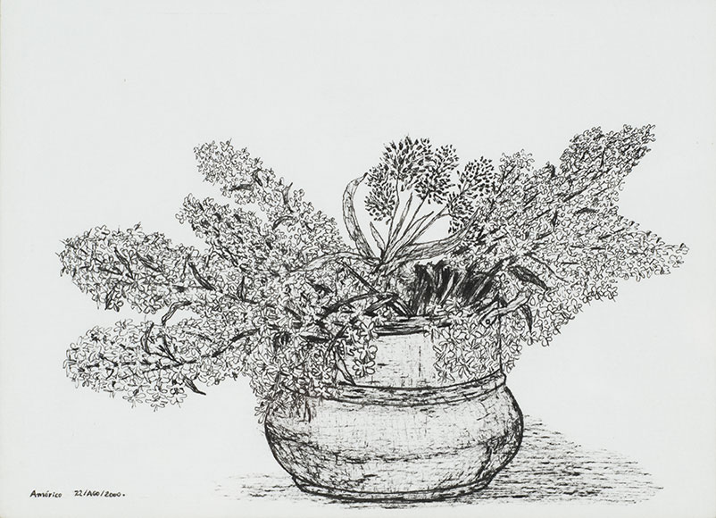 Lilac, Syringa vulgaris, and Red clover, Trifolium pratense (2000) - Ink on paper - 11.4x15.8 cm