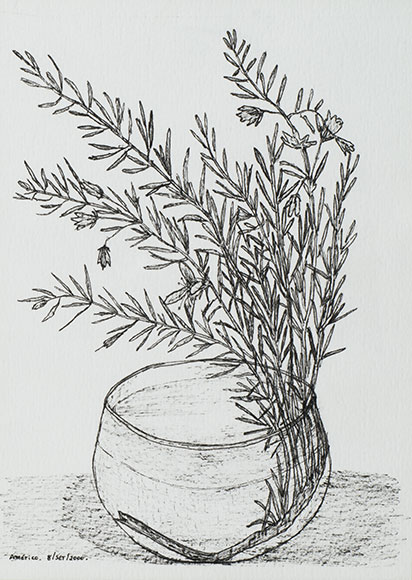 Alpine willowherb, Epilobium dodonaei (2000) - Ink on paper - 15.8x11.4 cm