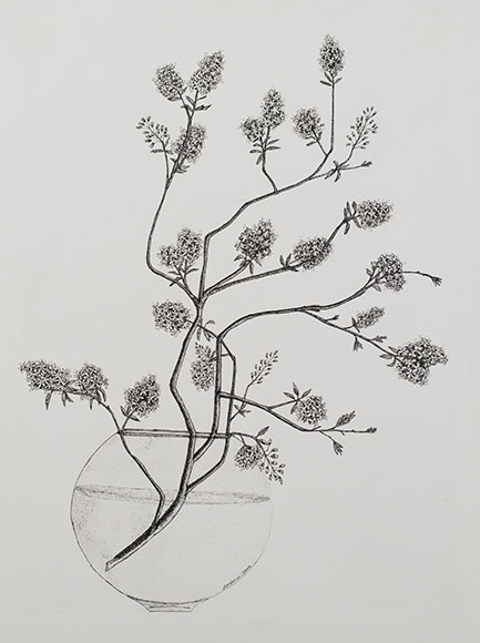 Common hawthorn, Crataegus monogyna (2003) - Ink on paper - 40x30 cm